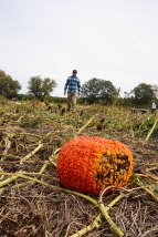 The hunt for the perfect pumpkins is no easy task